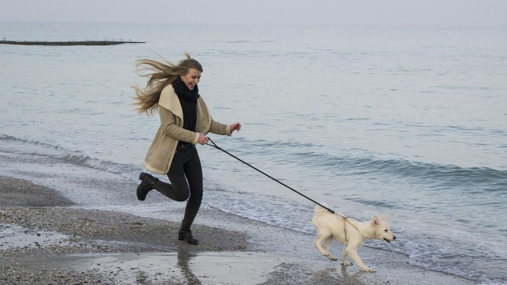 dog-774724_1280-pixabay